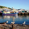 Brixham Harbour - young seagulls - geograph.org.uk - 893063.jpg