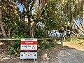 Broadbeach beach access, Gold Coast, Queensland.jpg