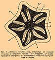 Brockhaus and Efron Encyclopedic Dictionary b38 892-2.jpg