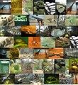 Bronx zoo montage.JPG