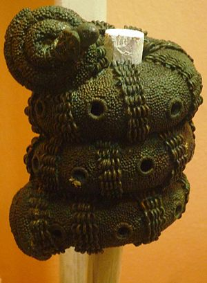 Anambra State - Ornamental staff head in form of a coiled snake, 9th-century bronze, Igbo-Ukwu, Anambra State