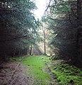 Brown Dod Wood - geograph.org.uk - 156206.jpg