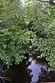 Bruchwiesen bei Büttelborn DSC 0238 Graben.jpg