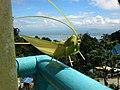 Bukit Bendera, Pulau Pinang, Malaysia - panoramio (12).jpg