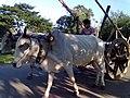 Bullock cart (Assam).jpg