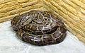 Burmese Python (3363874958).jpg