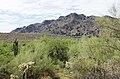 Butcher Jones Trail to Pinter's Point Loop, Tonto National Park, Saguaro Lake, Ft. McDowell, AZ - panoramio (86).jpg