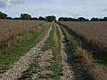 Byway on Thorn Hill - geograph.org.uk - 230216.jpg