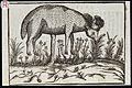 C. Duret, Histoire admirable des plantes et Wellcome L0032528.jpg