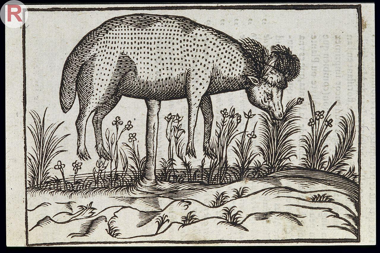 File c duret histoire admirable des plantes et wellcome for Histoire des jardins wikipedia