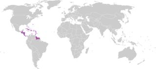 Confederación Centroamericana y del Caribe de Fútbol organization