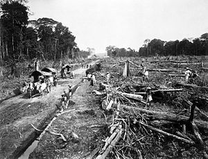Deforestation in Indonesia - Deforestation for a tobacco plantation in North Sumatra (ca.1900).