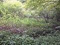 CP 62 - panoramio.jpg