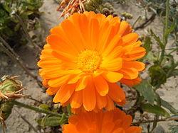 Garden Plants Flowers