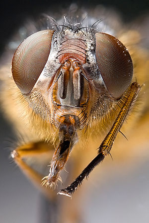 Insect - Most insects have compound eyes and two antennae.