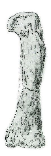 Camelotia