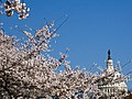 Capitol and Blossoms (3379133860).jpg