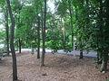 Caramoor - trees and path.JPG