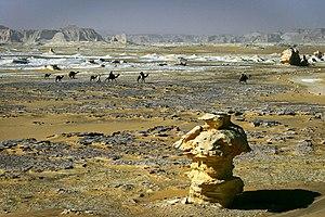 Awjila - Caravan in the Farafra desert to the east of Awjila