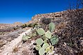 Carlsbad Caverns National Park and White's City, New Mexico, USA - 48344722151.jpg