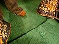 Carpet at Motel Yucca.jpg
