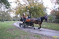 Carriage ride in the Park (8256295587).jpg