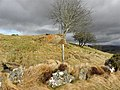 Cashel Townland - geograph.org.uk - 1770382.jpg