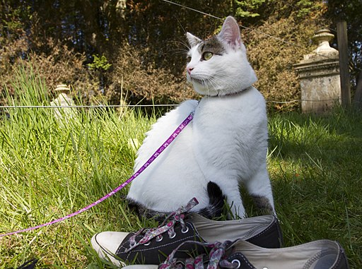 Cat, Lead and Converse Shoes (8208704568)