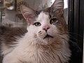 Cat Fawlen face.jpg