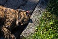Cat Relaxed In The Sun (207770293).jpeg