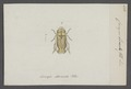 Cercopis - Print - Iconographia Zoologica - Special Collections University of Amsterdam - UBAINV0274 042 05 0006.tif