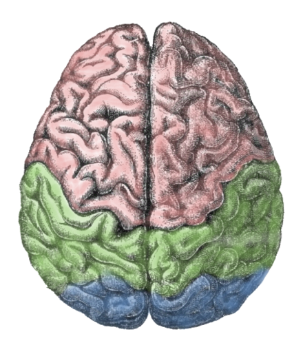 Lateralization of brain function wikiwand the human brain is divided into two hemispheresleft and right scientists continue to ccuart Images