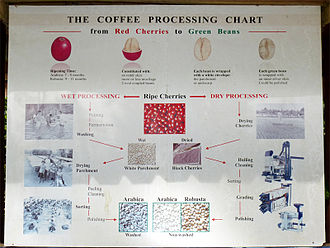 Bolaven Plateau - Coffee processing on the Bolaven Plateau