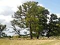 Charlecote Park Deer Sunctuary - panoramio (1).jpg