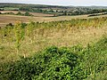 Chartham Downs from Chartham Downs Road - geograph.org.uk - 569907.jpg
