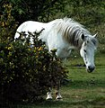 Chester the Crusader Horse.jpg