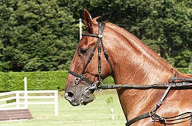 Chestnut French Trotter horse head, Guillac.jpg
