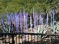 Chihuly in the Desert Botanical Garden - panoramio (15).jpg