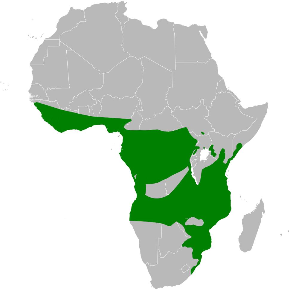 Chlorocichla distribution map