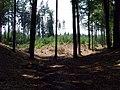 Choceň, severní strana vrchu Čertův dub (01).jpg