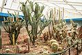 Christchurch Botanic Gardens cactus pavilion 2016-02-04.jpg