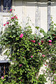 Church of Ss Mary & Lawrence - churchyard east cottage rose.JPG