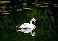 """Cincinnati - Spring Grove Cemetery & Arboretum """"Swan Reflecting"""" (3935393279).jpg"""