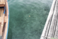 Clear lake blead (14830837613).png