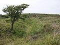 Climbing Godolphin Hill - geograph.org.uk - 184040.jpg