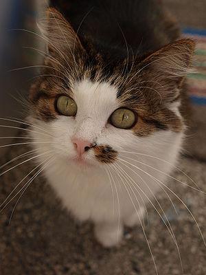 A close-up shot of a cat.