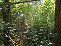 Cobweb. Apáti hill. - Tihany Peninsula, Hungary.JPG