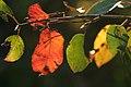 Color Line (1475775655).jpg