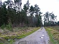 Coniferous woodland - geograph.org.uk - 1129748.jpg