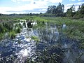 Cooper Marsh Conservation Area 24.jpg